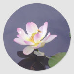 Pink Lotus with Dragon Fly Round Sticker