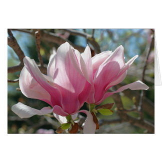 Pink Magnolia Blossoms Flower Photography Card
