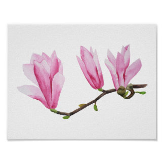 Pink magnolia branch in bloom watercolor painting poster