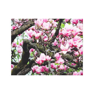 Pink Magnolia - Canvas Art - Tropical Flower