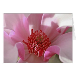 Pink Magnolia Card