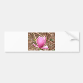 Pink Magnolia flower in bloom Bumper Stickers