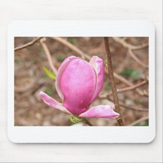 Pink Magnolia flower in bloom Mousepads