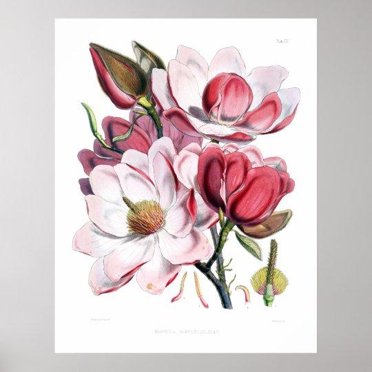 Pink Magnolia Flowers Print