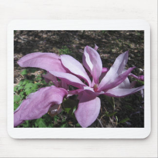 Pink Magnolia In Bloom Mouse Pad