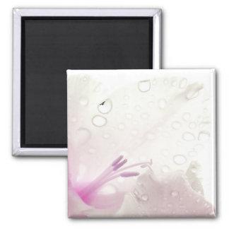 Pink Magnolia Magnet