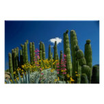Pink Many plants, Sonoran Desert, Arizona flowers Posters