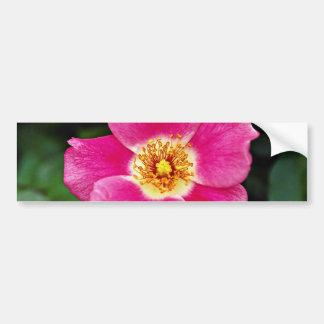 Pink Meidiland tm Shrub Rose Meipoque White fl Bumper Sticker