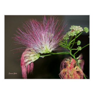 Pink Mimosa Flower with Brown Photo Print