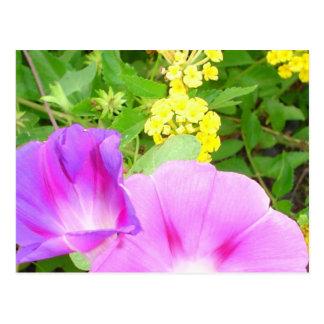 Pink Morning Glories Growing by Yellow Lantana Postcard