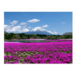 Pink moss and Mt. Fuji in the background
