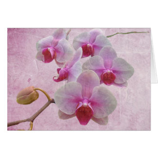 Pink Moth Orchids - Phalaenopsis Card