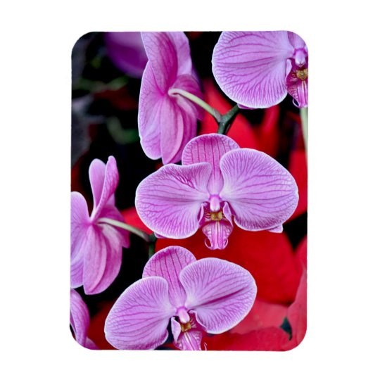 Pink moth orchids print magnet