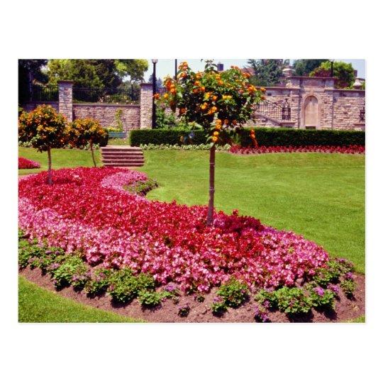 Pink Muir Gardens, Toronto, Ontario flowers Postcard