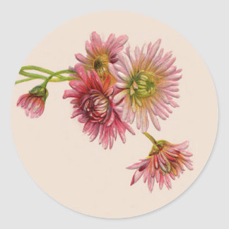 PINK MUMS by SHARON SHARPE Stickers