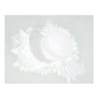 Pink murex (Murex erythrostomus) Shell Customized Letterhead