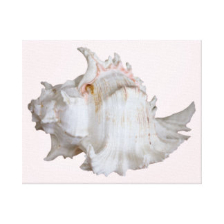 Pink Murex Shell Wrapped Canvas Print