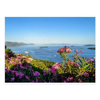Pink Oleander Flowers Postcard