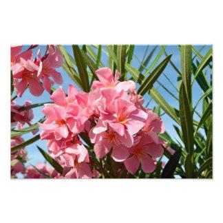 Pink oleander Photo Enlargement