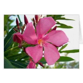 Pink Oleander Photo Greeting Card