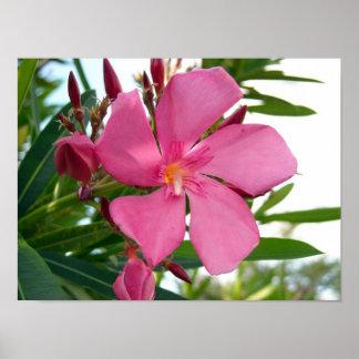 Pink Oleander Photo Poster