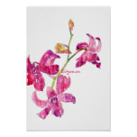 Pink Orchid Babies Floral Sketch Poster Print