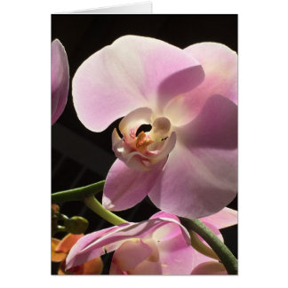 Pink Orchid Blank Inside Card