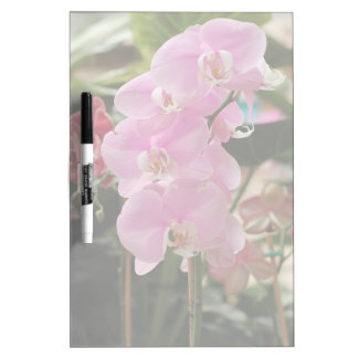 Pink Orchid blooms Dry Erase Board