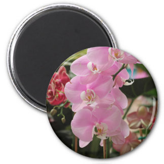 Pink Orchid blooms Refrigerator Magnets