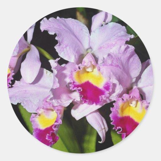 Pink Orchid cattleya trianae flowers Round Stickers