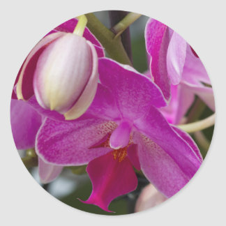 pink orchid classic round sticker
