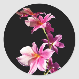 Pink Orchid. Classic Round Sticker