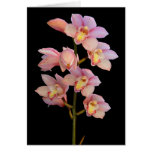 Pink orchid flower card