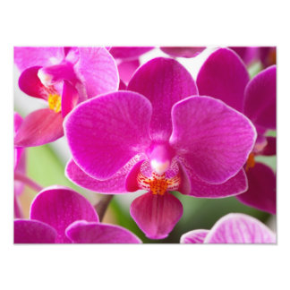 Pink Orchid Flower - Floral Orchids Template Photo Print