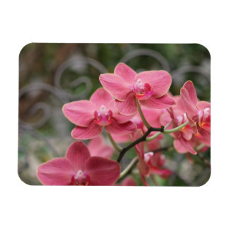 Pink Orchid flowers Flexible Magnets