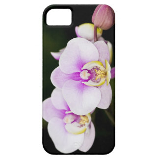 Pink Orchid iPhone 5 Case