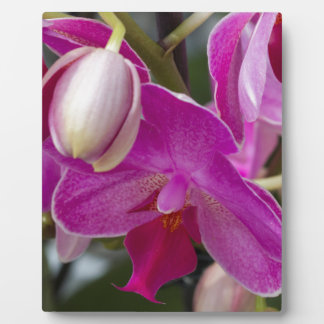 pink orchid plaque