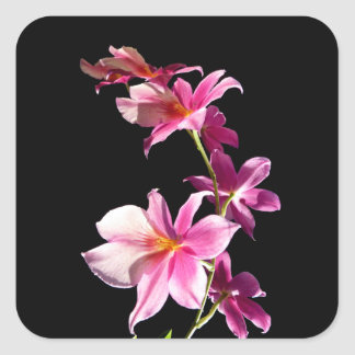 Pink Orchid. Square Sticker