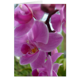 Pink Orchid Thank you Card