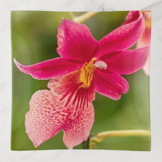 Pink Orchid Trinket Tray