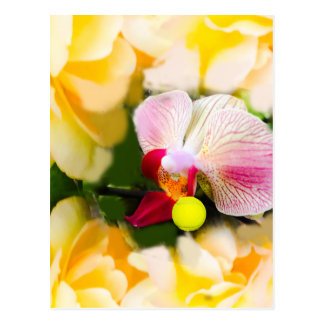 Pink orchid with tennis ball postcard