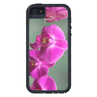 Pink Orchids Case For The iPhone 5