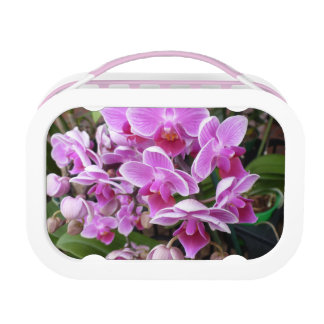 Pink Orchids Lunch Box