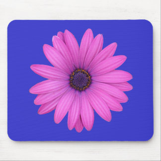 Pink Osteospermum and Transparent Background Mouse Pad