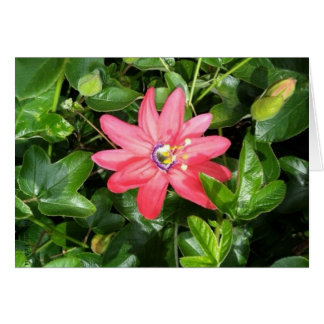 Pink Passion Flower Note Card