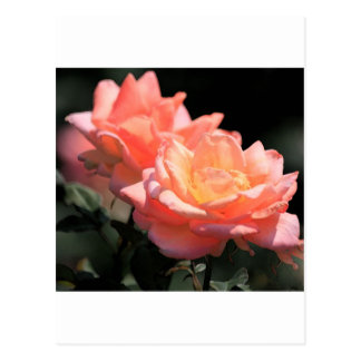 Pink Passion Postcards