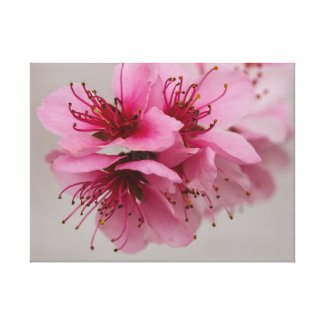 Pink Peach Blossom Stretched Canvas Wall Art