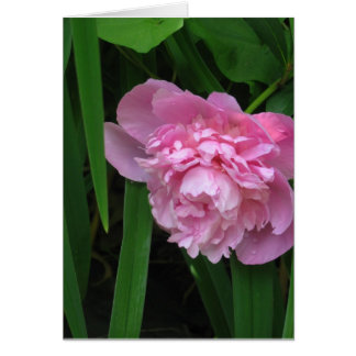 Pink Peony Blossom - Photograph Greeting Card