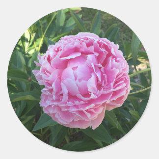 Pink Peony Classic Round Sticker
