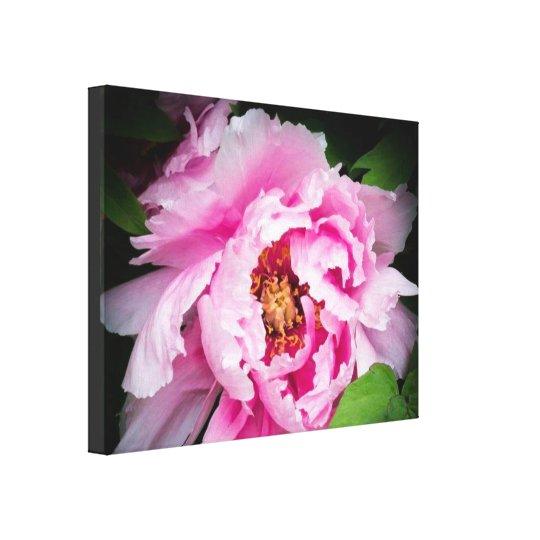 Pink Peony Flower Modern Nature Canvas Canvas Print